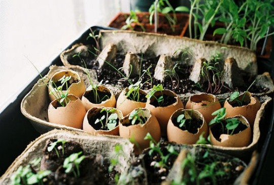egg-carton-seed-starting